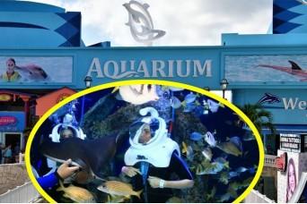 Trek at Cancun Interactive Aquarium